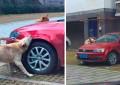 Un maidanez izgonit de un sofer s-a RAZBUNAT pe masina acestuia! FOTO