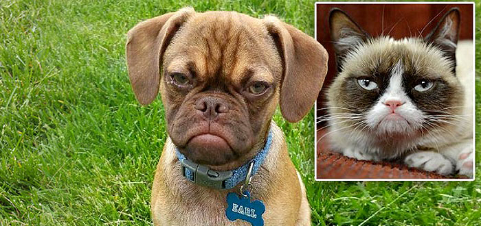 "A aparut ""The Grumpy Puppy"", rivalul faimoasei ""The Grumpy Cat"""