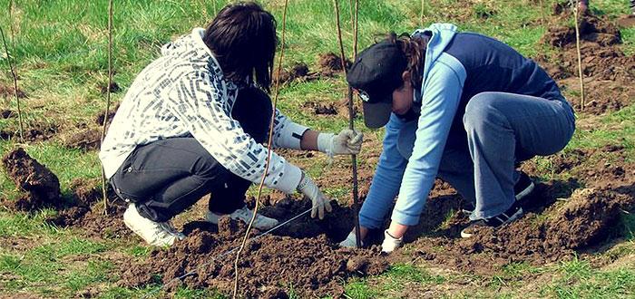 Au inceput pregatirile pentru plantarea a 1 MILION de copaci in Romania