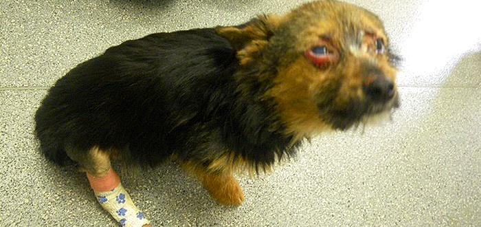 Pana la 7 ani de INCHISOARE pentru cei care TORTUREAZA ANIMALE