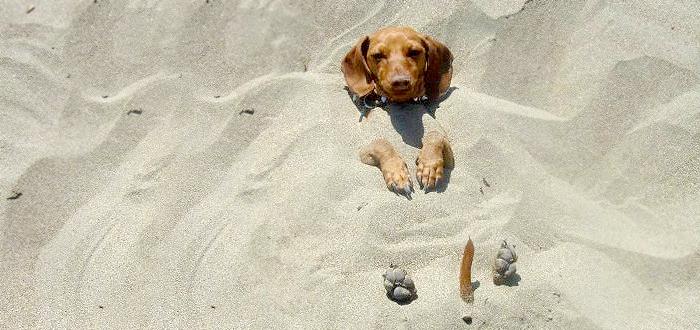 Amenzi usturatoare pentru cei care isi plimba cainii pe plaja!