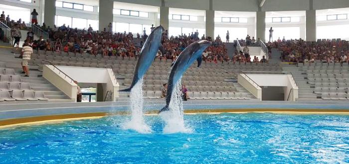 VIDEO. Delfinii Ni-Ni şi Chen-Chen au fost mutaţi în NOUL BAZIN! Program Delfinariu Constanţa