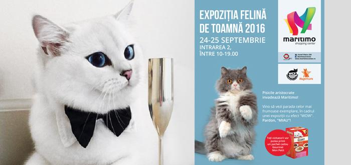 EXPOZIŢIE de feline. Pisicile aristocrate invadează Maritimo!