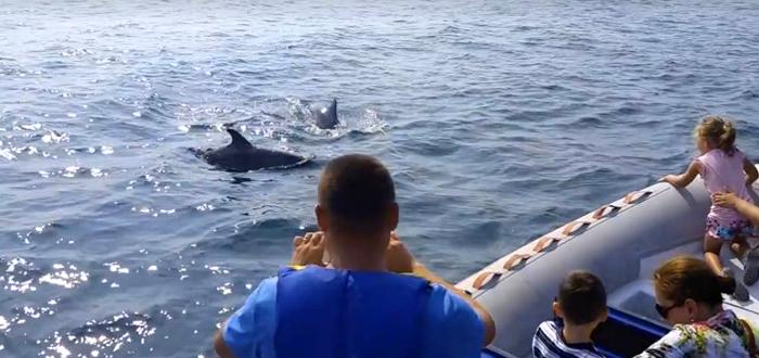 Pe urmele DELFINILOR, în şalupă, cu Dream Explorer!