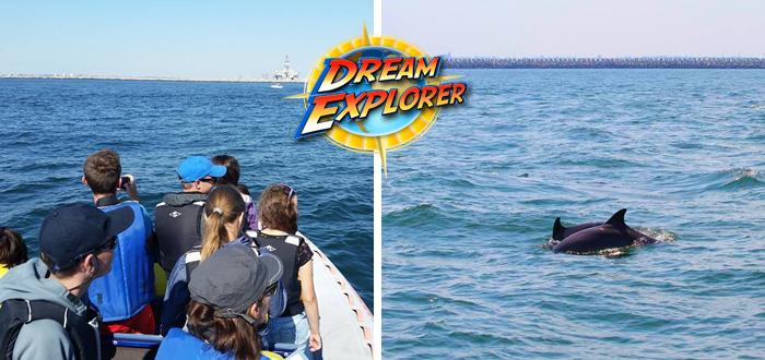 Plimbare cu şalupa. Pe urmele DELFINILOR, cu Dream Explorer!