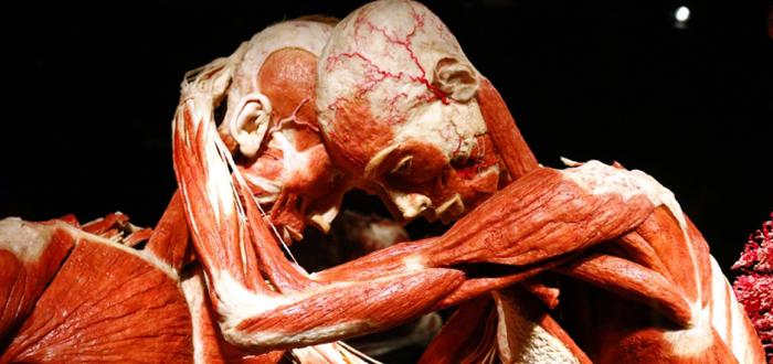 Corpuri umane REALE, expuse la Constanţa! O expoziţie unică, OUR BODY: Universul interior