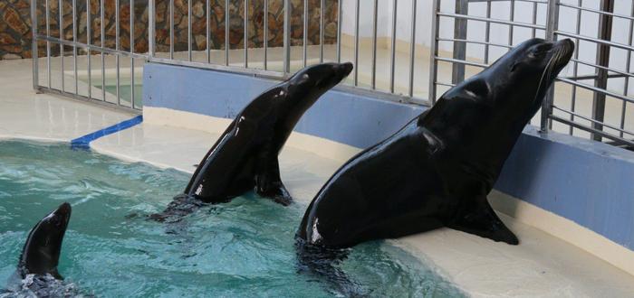 Delfinariul Constanța are acum trei lei de mare californieni