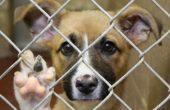 Adăpostul pentru câinii fără stăpân își reia activitatea