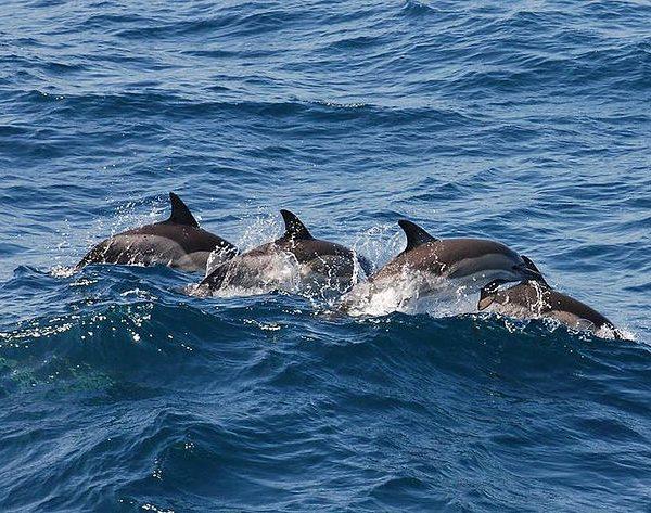 Pe urmele delfinilor din Marea Neagră cu Dream Explorer